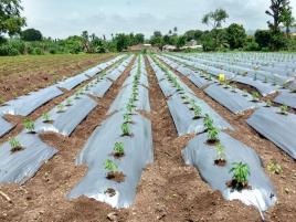 Organic Fertilizer for Planting