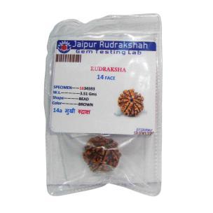 Satyamani Natural Certified Energized Rudraksha 14 Mukhi